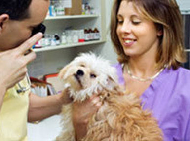 how to become a veterinary assistant in australia